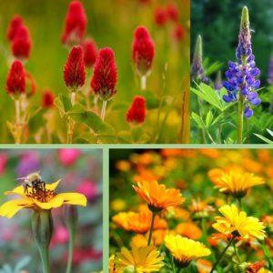 Fleurs annuelles