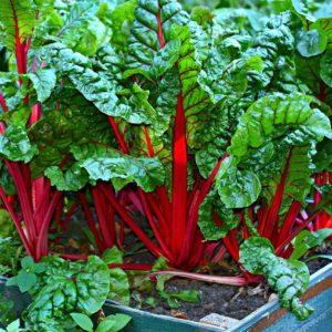 Autres légumes feuilles